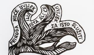 "U kategoriji dizajniram plakat Stablo mojega zavičaja natječaja ""Želim, stvaram, oblikujem"" treću nagradu za predmetnu nastavu dobio je David Polančec, učenik 7. razreda OŠ Fran Koncelak iz Drnje pod vodstvom mentora, učitelja Maria Dimića."