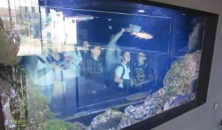 Učenje u Aquatici