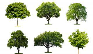 Želim stablo