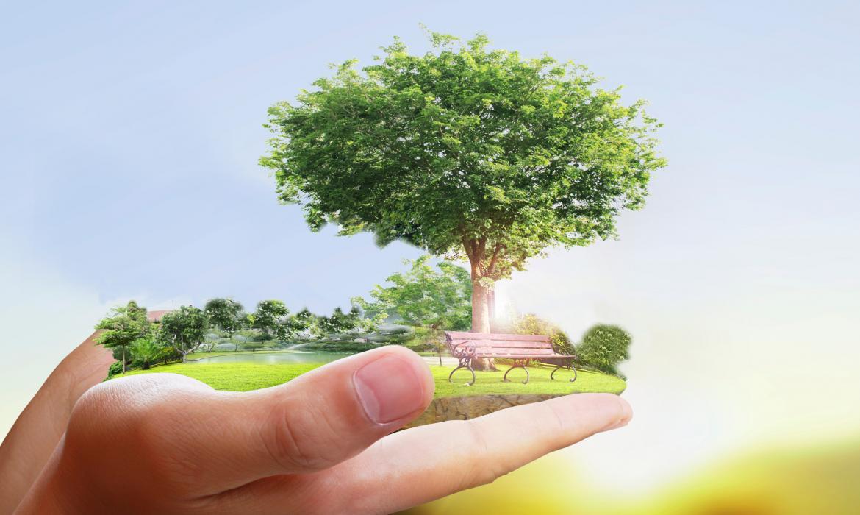 Štitimo drveće pametnim raspolaganjem papira