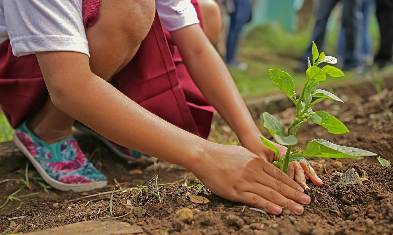 Sadimo stabla, čuvajmo okoliš