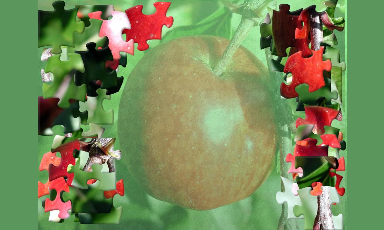 Plod jabuke